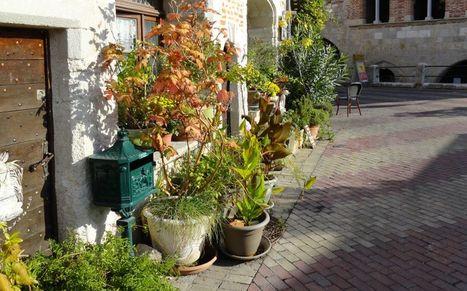 Jardin de trottoir, aménager et fleurir ...