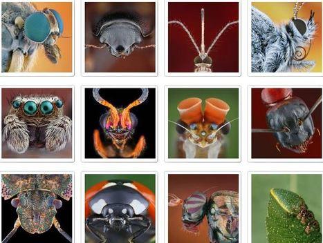 Hyönteisten Pornic