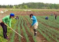 Farming News - Research reveals wealth gap in access to sustainable food | The Barley Mow | Scoop.it