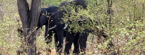 2 Essentials to Saving African Elephants in Malawi | Wildlife Conservation: People and Stories | Scoop.it