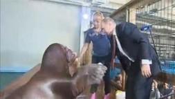 Buzz: Le meilleur pote de #Poutine est un ....phoque !! (video) #TPMP | cotentin webradio Buzz,peoples,news ! | Scoop.it