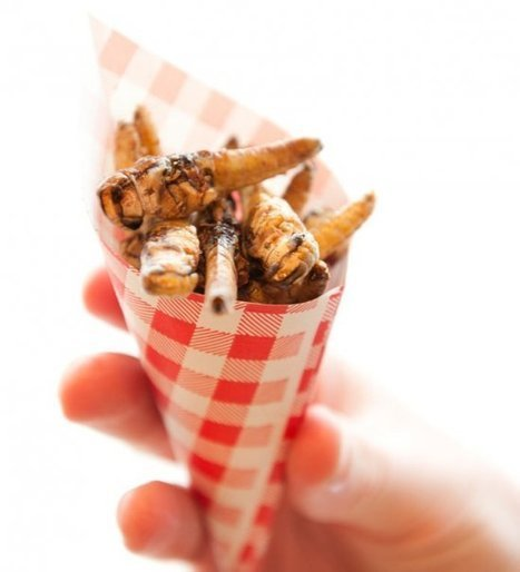 EcoXpo Sydney 2014: Cooking with Bugs | Entomophagy: Edible Insects and the Future of Food | Scoop.it