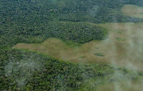 How effective are tropical forest conservation policies? | Confidences Canopéennes | Scoop.it