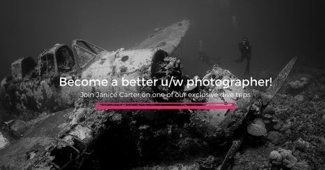Here is how You Become a better underwater photographer! | Bookyourdive | Scoop.it