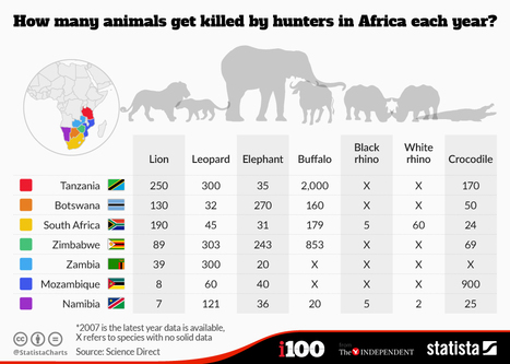 How Many Animals Are Killed By Trophy Hunters Each Year? | Trophy Hunting: It's Impact on Wildlife and People | Scoop.it