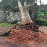 Finding Reputable Tree Services To Help With Storm Clean-Up