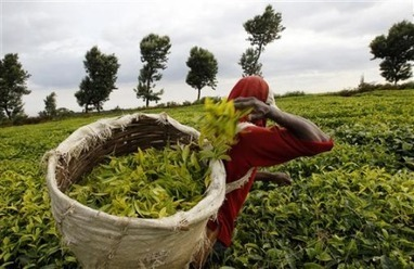 AFRICA: Weak Land Rights, Souring Foreign Investments fuel potential climate conflicts   CLIMATE CHANGE WILL IMPACT US ALL   Scoop.it