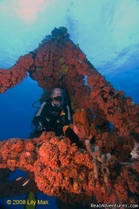 Real Adventures Scuba Diving Travel Dive Information Directory | Scuba Diving Adventures | Scoop.it