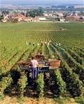 Wines of the Domaine de la Romanée-Conti | Burgundy Flavour | Scoop.it
