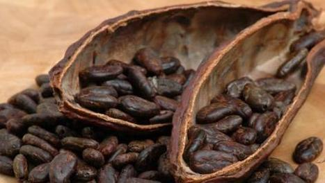 Global Cacao Shortage Leading Investors Back to the Amazon - Paste Magazine | Fair Trade Choco-locate | Scoop.it