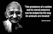 Humane Treatment of Animals