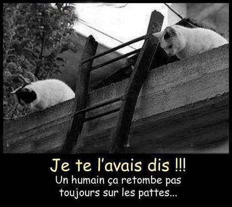Image du Blog caroline-francois.centerblog.net | Histoire de chats | Scoop.it