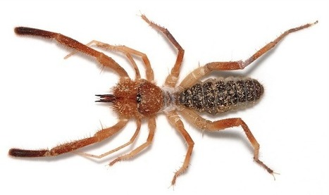 Expiscor, une sélection hebdomadaire, sur le blog Arthropod Ecology [anglais] | EntomoNews | Scoop.it