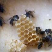 Un 3 por ciento de la población es alérgica a avispas y abejas, con ... | Bichos en Clase | Scoop.it