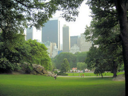 Los bancos de Central Park   Acanto Jardineria y Paisajismo   Reflejos   Scoop.it