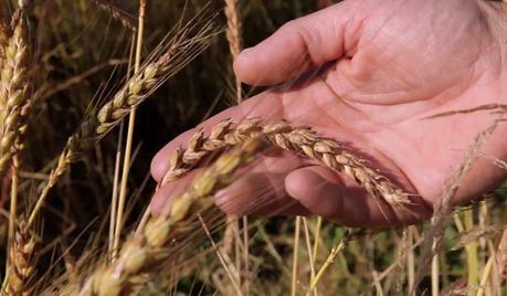 « La Guerre des Graines » : enquête sur une bataille souterraine et silencieuse | Bastamag.net | Matière agricole | Scoop.it