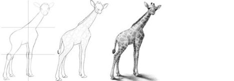How to Draw a Baby Giraffe  Drawing and Painti
