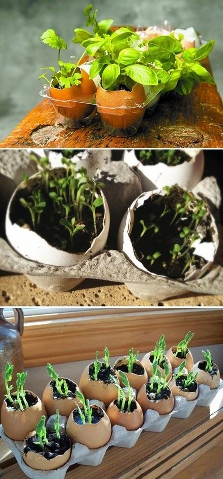 Planting seeds in eggshells   Market Growing   Scoop.it