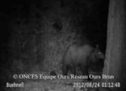 L'ours, responsable des inondations en montagne? Réaction de Philippe Serpault | FERUS | Sauvegarde et Protection des animaux | Scoop.it