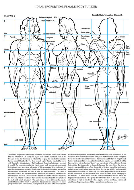 Anatomy For Artists In Drawing References And Resources