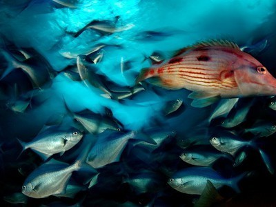 10 Beautiful Photos Celebrating World Oceans Day 2012 | All about nature | Scoop.it