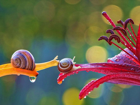 Incredible snail photos reveal the secret life of our mollusc friends - Lost At E Minor: For creative people | Art-Arte-Cultura | Scoop.it