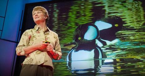 Biomimicry in action | The Landscape Café | Scoop.it