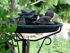 Attract wildlife with a bird bath | Gardening Life | Scoop.it