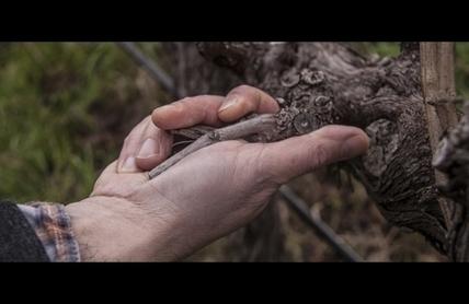 Australian bottled wine exports continue to grow across higher price points | Autour du vin | Scoop.it