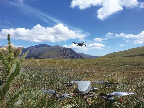 Rise Of The Insect Drones | Social Foraging | Scoop.it