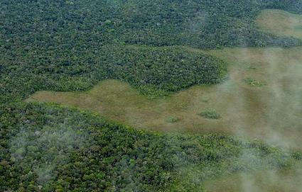 Halting deforestation: lessons from Brazil | Global environmental change | Scoop.it