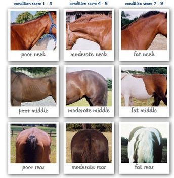 How Healthy is Your Horse? | Equestrian Vacations | Scoop.it