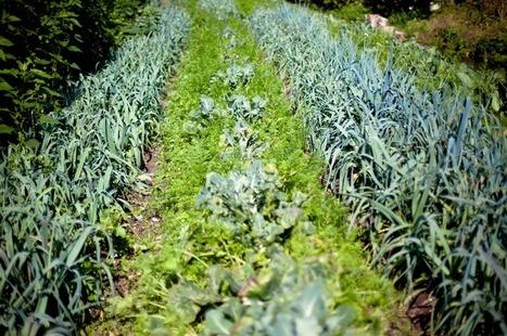 Les miracles de la permaculture | Matière agricole | Scoop.it