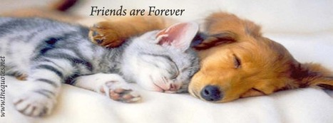 Facebook Cover Image - Friendship - TheQuotes.Net | Facebook Cover Photos | Scoop.it