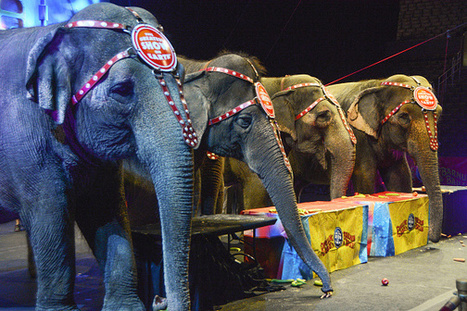 Ringling Bros. and Barnum & Bailey Circus Due To Close In May After 146 Years | Nerd Vittles Daily Dump | Scoop.it
