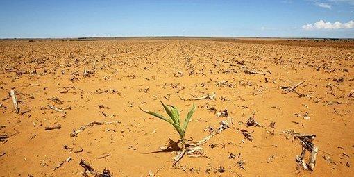 Pour en finir avec l'insécurité alimentaire en Afrique et en Méditerranée