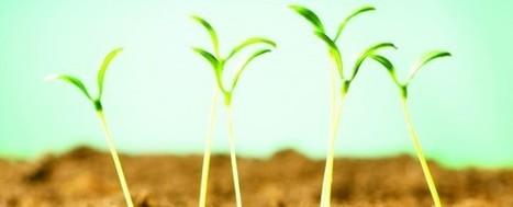 Agricultura urbana. Una alternativa para la producción de alimentos ...   Cultivos Hidropónicos   Scoop.it