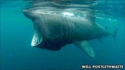 City holds European shark conference   Ocean News   Scoop.it