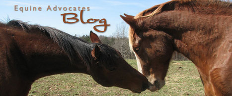 the contemporary issues on horse slaughtering