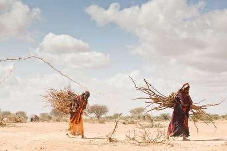 New UN report cites 'unprecedented climate extremes' over past decade   Développement durable et efficacité énergétique   Scoop.it