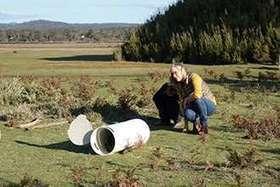 World first trial of Tasmanian devil vaccine begins in the wild | Virology News | Scoop.it