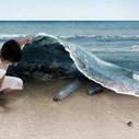 Environmental Education for Children | Environmental Education & Wildlife Conservation | Scoop.it