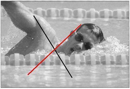 Lecturas: Educación Física y Deportes, Revista Digital | Natación | Scoop.it