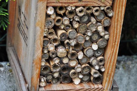 Jardin écologique : les nichoirs et les abris à insectes ça marche ... | jardins et développement durable | Scoop.it