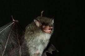 Walking catfish, demon bat among 126 new Mekong species - Fox News | Science, Technology & Invention News | Scoop.it