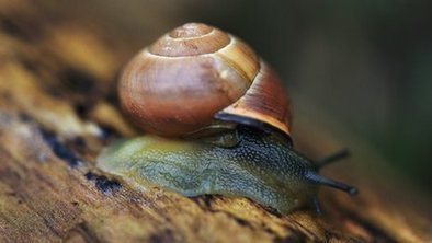 Snail genes reveal human migration | I love my world - natural outdoor play | Scoop.it