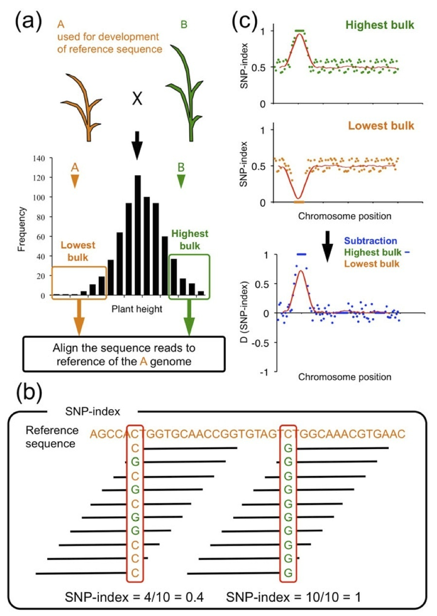 development planning qtls Discovery of consistent qtls of wheat spike-related traits under nitrogen treatment at different development stages.