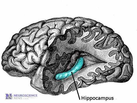 How Our Memories Guide Attention | Social Neuroscience Advances | Scoop.it