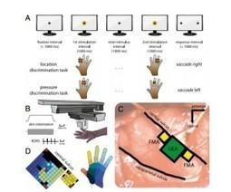 A Blueprint for Restoring Touch With a Prosthetic Hand | Social Neuroscience Advances | Scoop.it