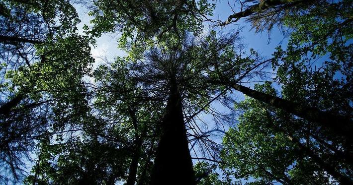 Pologne: qui veut sauver la dernière forêt vierge d'Europe? | Bois, forêt, construction, bois énergie, ameublement et plus | Scoop.it
